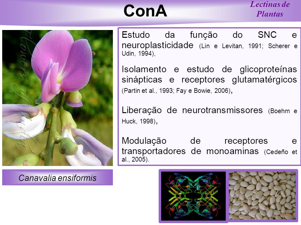 ConALectinas de Plantas. Estudo da função do SNC e neuroplasticidade (Lin e Levitan, 1991; Scherer e Udin, 1994),