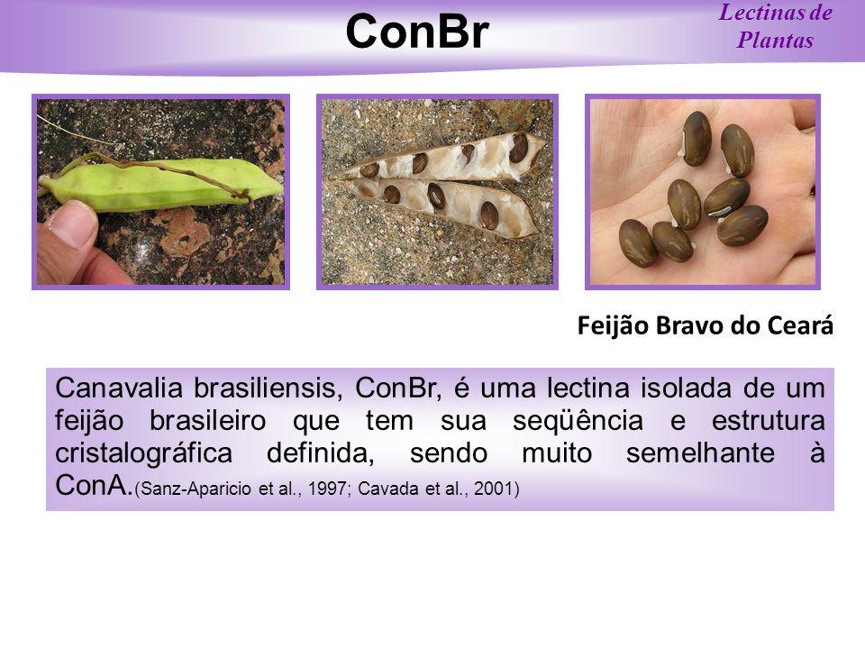 ConBr Feijão Bravo do Ceará