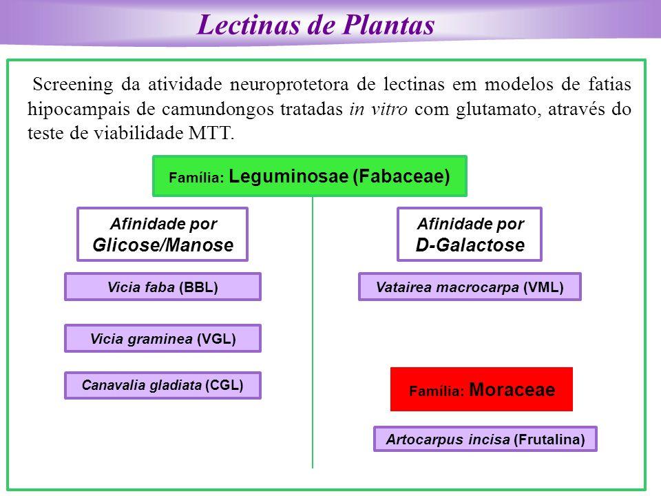 Lectinas de Plantas