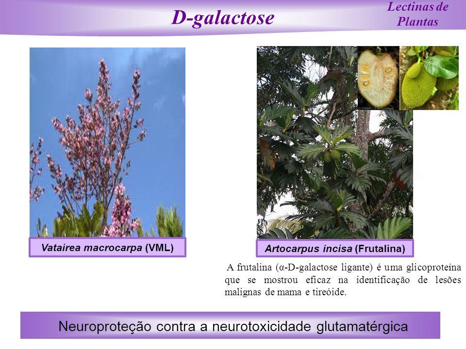 Vatairea macrocarpa (VML) Artocarpus incisa (Frutalina)