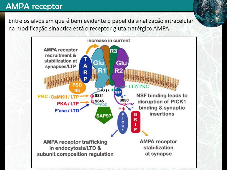 AMPA receptorEntre os alvos em que é bem evidente o papel da sinalização intracelular na modificação sináptica está o receptor glutamatérgico AMPA.
