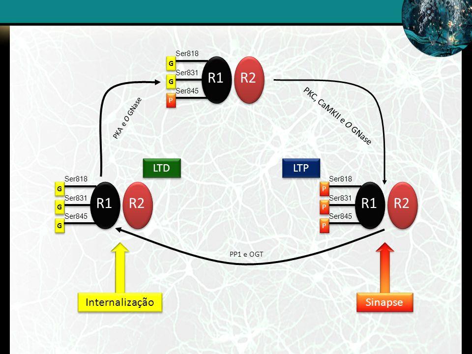 R1 R2 R1 R2 R1 R2 LTD LTP Internalização Sinapse PKC, CaMKII e O GNase