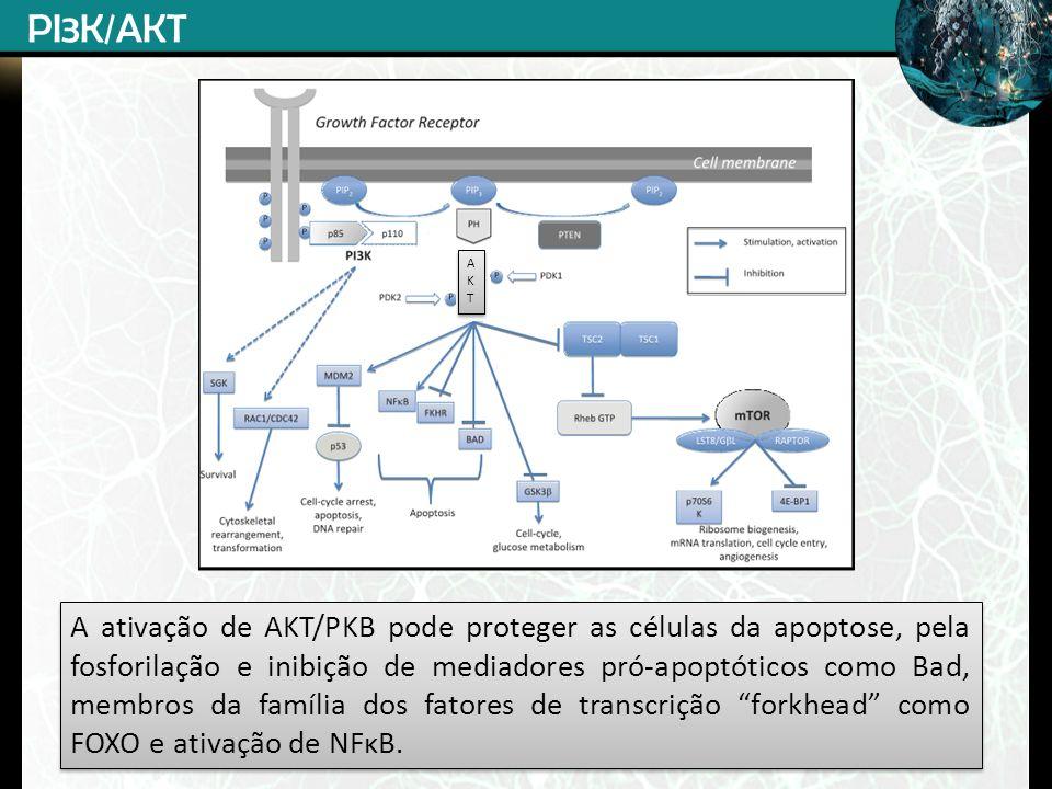 PI3K/AKT A. K. T.