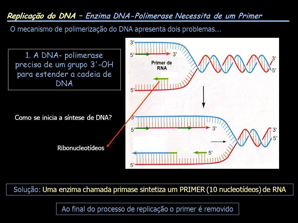 Replicação do DNA – Enzima DNA-Polimerase Necessita de um Primer