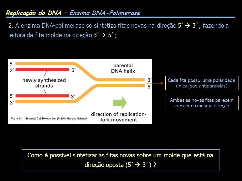 Replicação do DNA – Enzima DNA-Polimerase