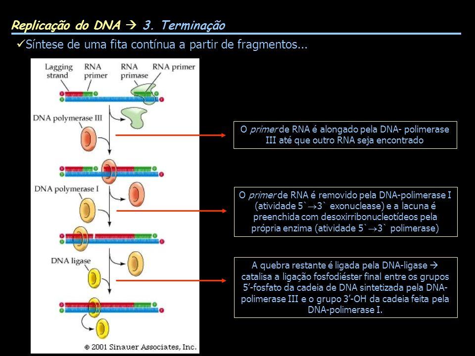 Replicação do DNA  3. Terminação