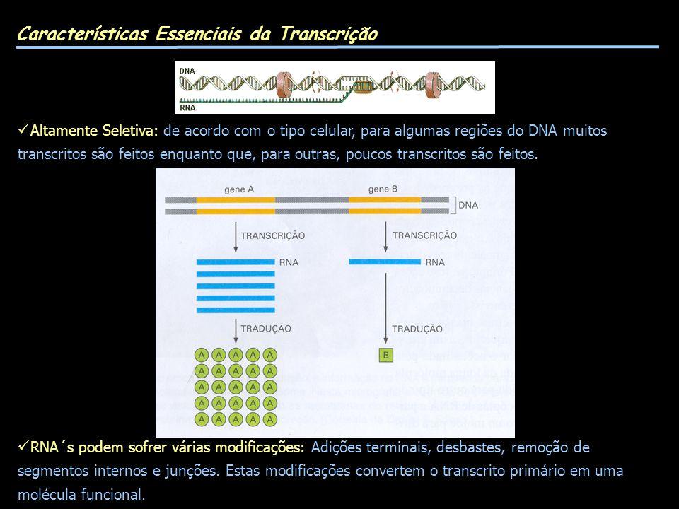 Características Essenciais da Transcrição