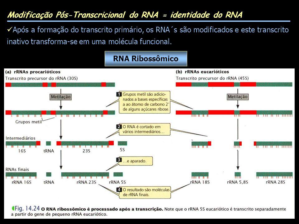 Modificação Pós-Transcricional do RNA = identidade do RNA
