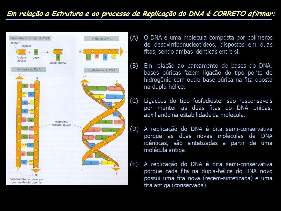 Em relação a Estrutura e ao processo de Replicação do DNA é CORRETO afirmar: