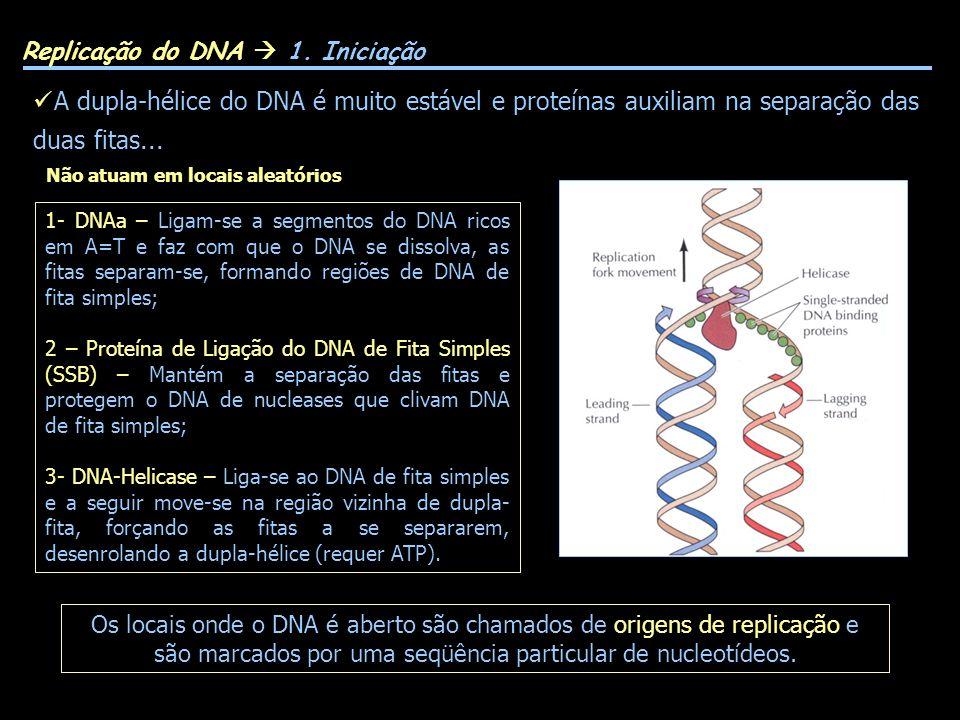Replicação do DNA  1. Iniciação