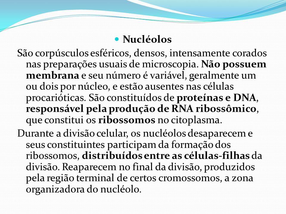 Nucléolos