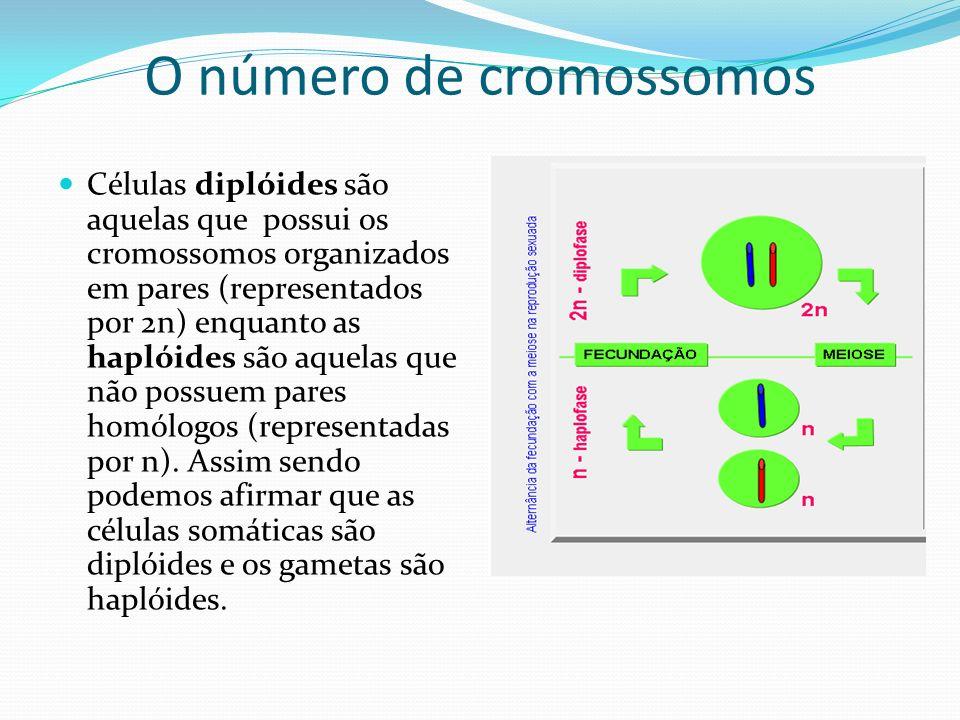 O número de cromossomos