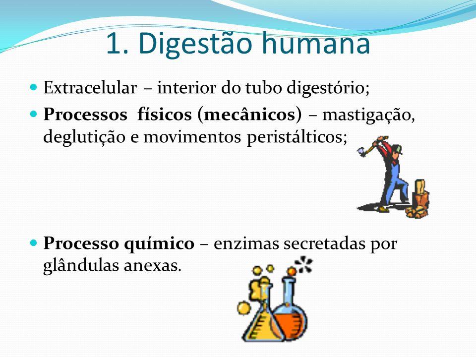 1. Digestão humana Extracelular – interior do tubo digestório;