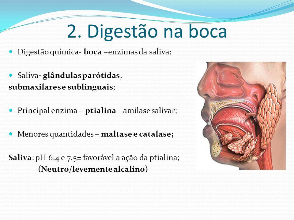 2. Digestão na boca Digestão química- boca –enzimas da saliva;