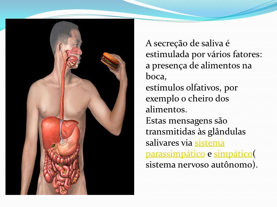 A secreção de saliva é estimulada por vários fatores: