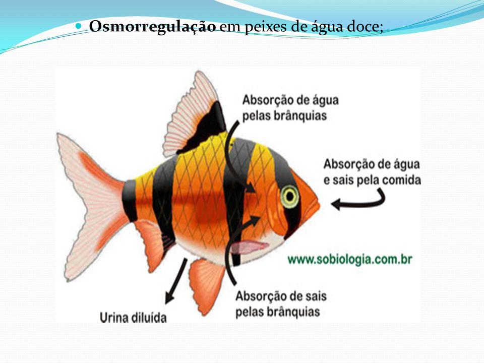 Osmorregulação em peixes de água doce;