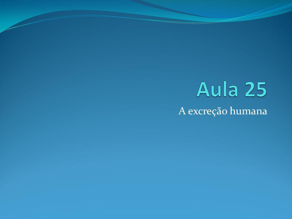 Aula 25 A excreção humana