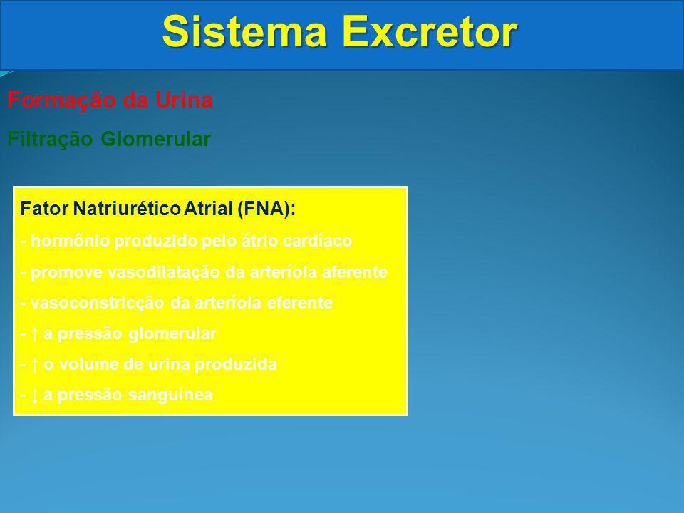 Sistema Excretor Formação da Urina Filtração Glomerular