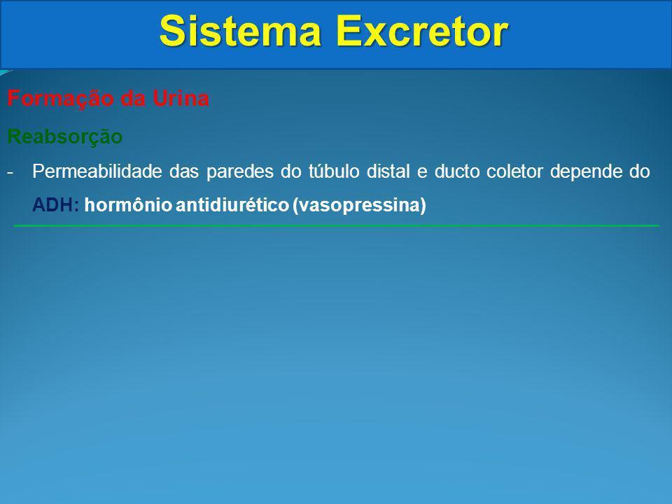 Sistema Excretor Formação da Urina Reabsorção