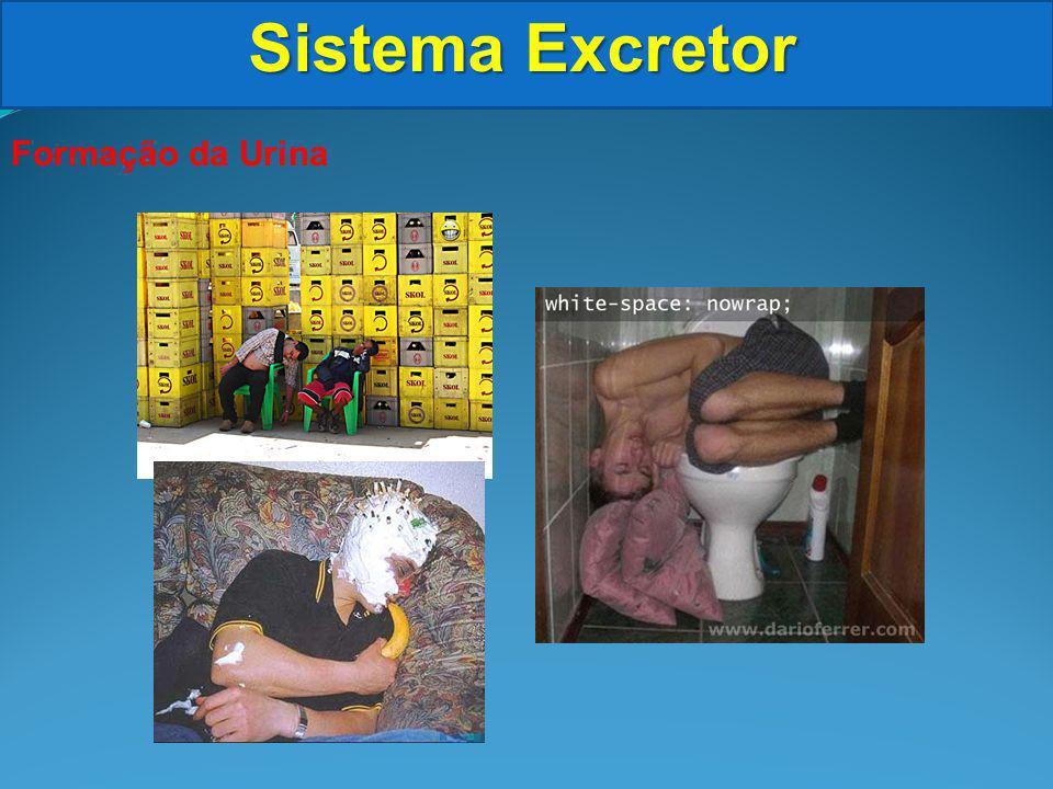 Sistema Excretor Formação da Urina