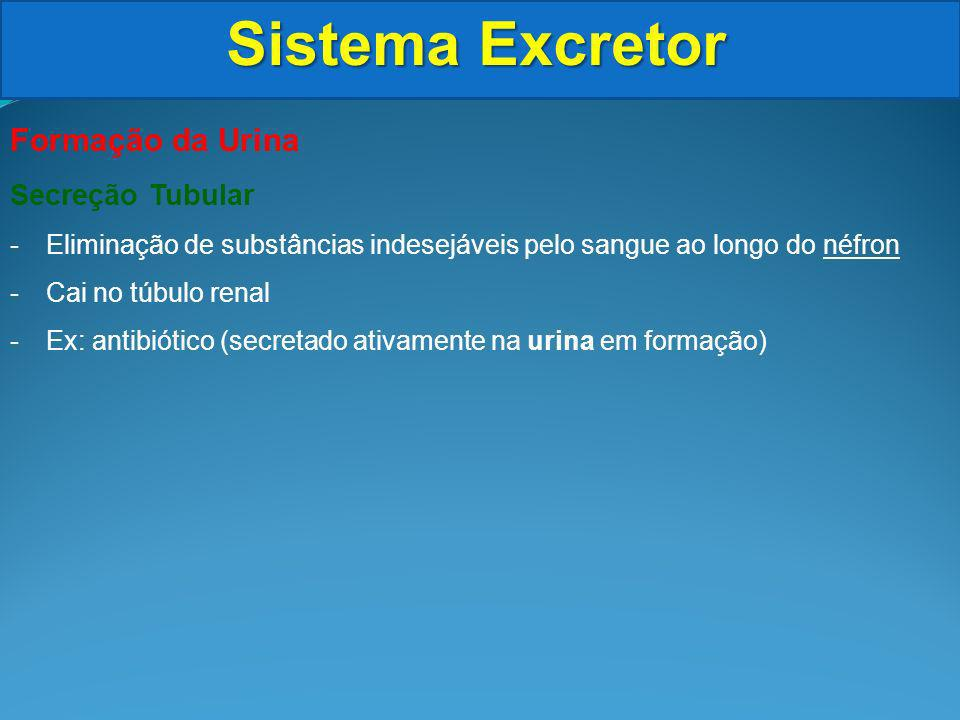 Sistema Excretor Formação da Urina Secreção Tubular