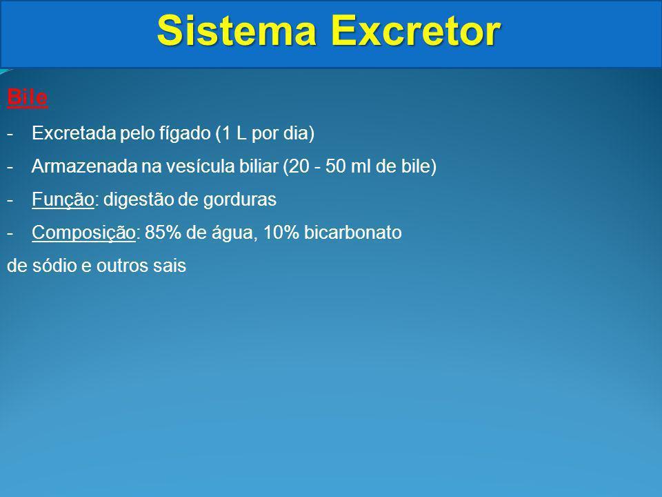 Sistema Excretor Bile Excretada pelo fígado (1 L por dia)