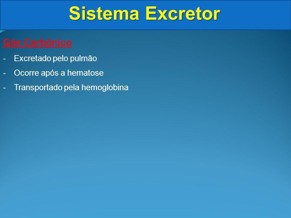 Sistema Excretor Gás Carbônico Excretado pelo pulmão
