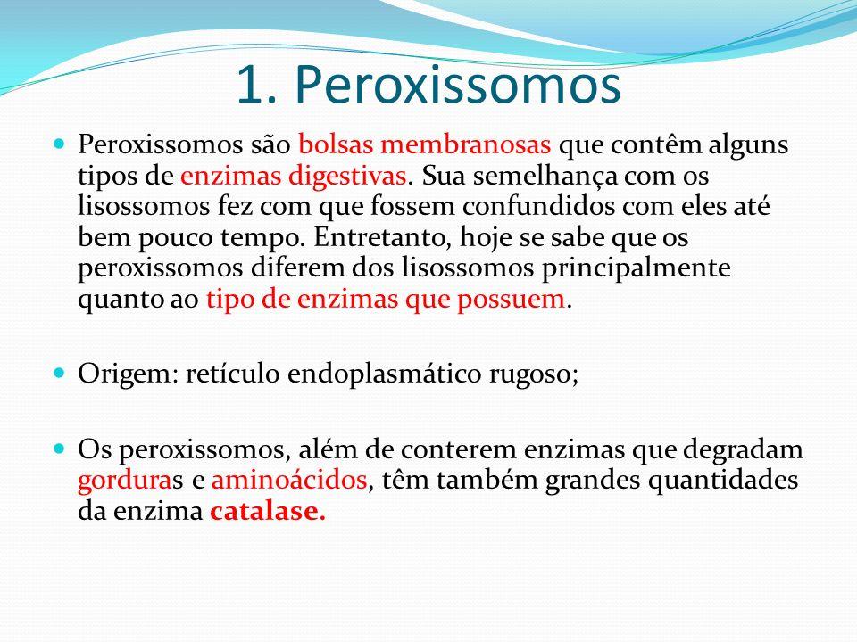 1. Peroxissomos