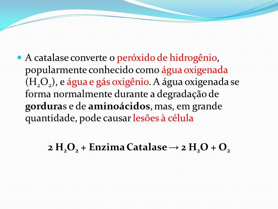 2 H2O2 + Enzima Catalase → 2 H2O + O2