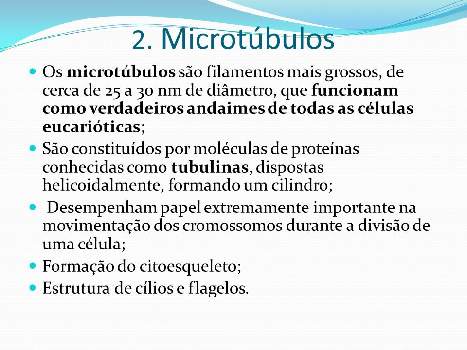2. Microtúbulos