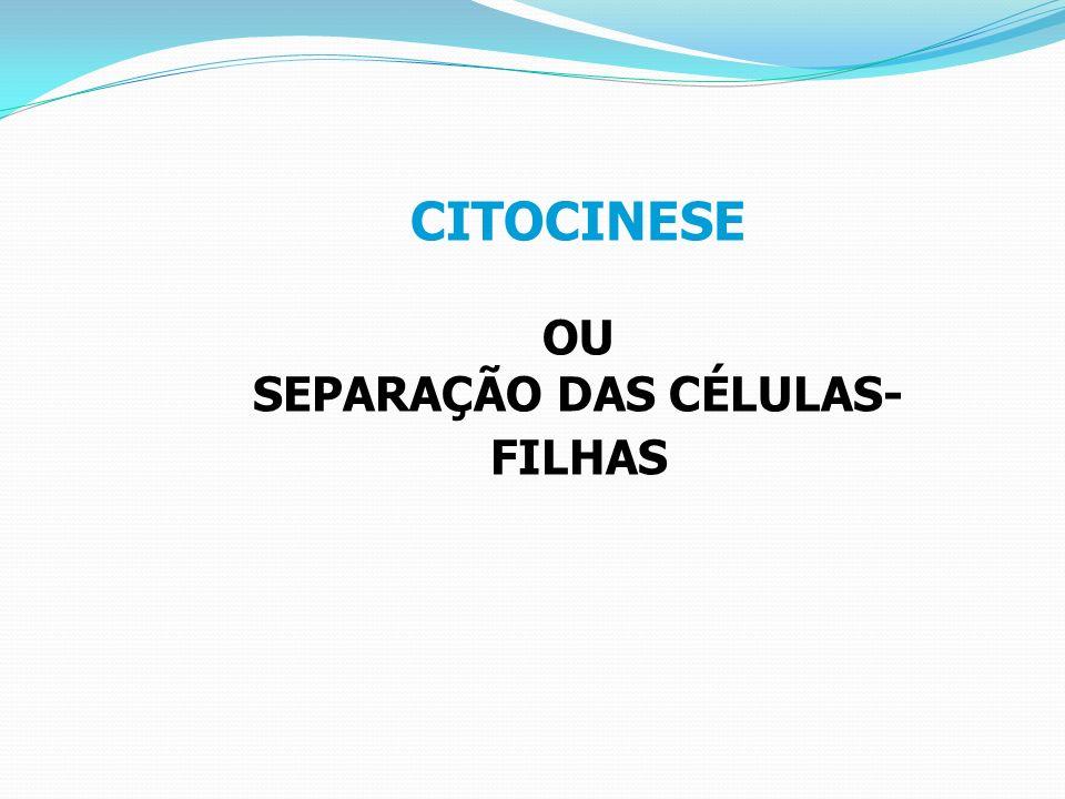 SEPARAÇÃO DAS CÉLULAS-FILHAS