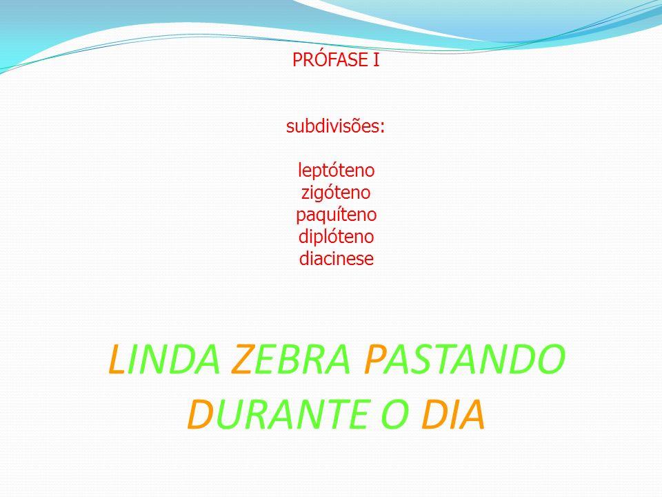 PRÓFASE I subdivisões: leptóteno zigóteno paquíteno diplóteno diacinese LINDA ZEBRA PASTANDO DURANTE O DIA
