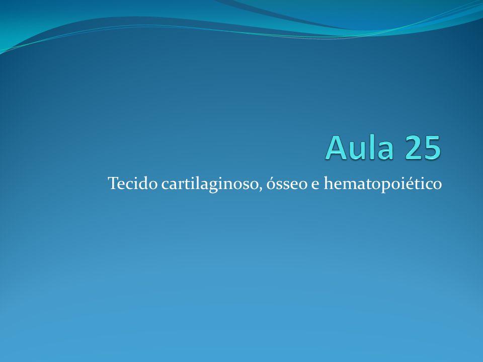 Tecido cartilaginoso, ósseo e hematopoiético