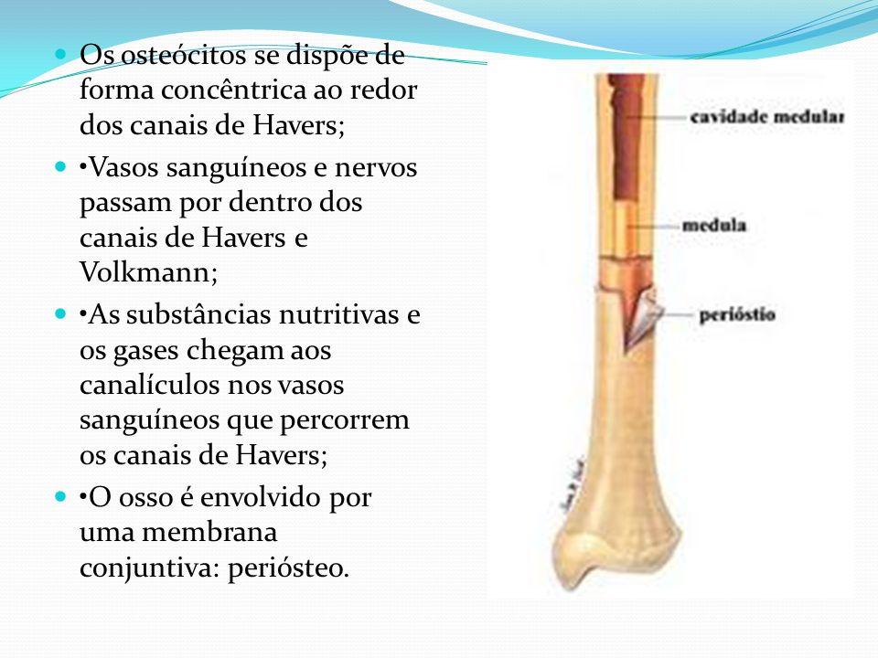 Os osteócitos se dispõe de forma concêntrica ao redor dos canais de Havers;