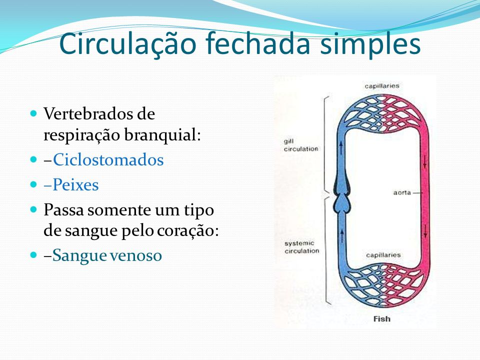 Circulação fechada simples
