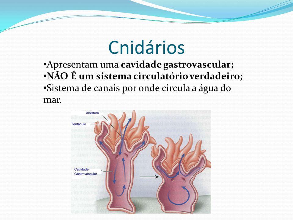 Cnidários Apresentam uma cavidade gastrovascular;