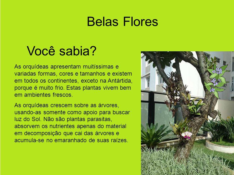 Belas Flores Você sabia