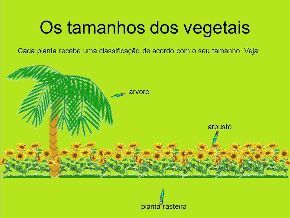 Os tamanhos dos vegetais