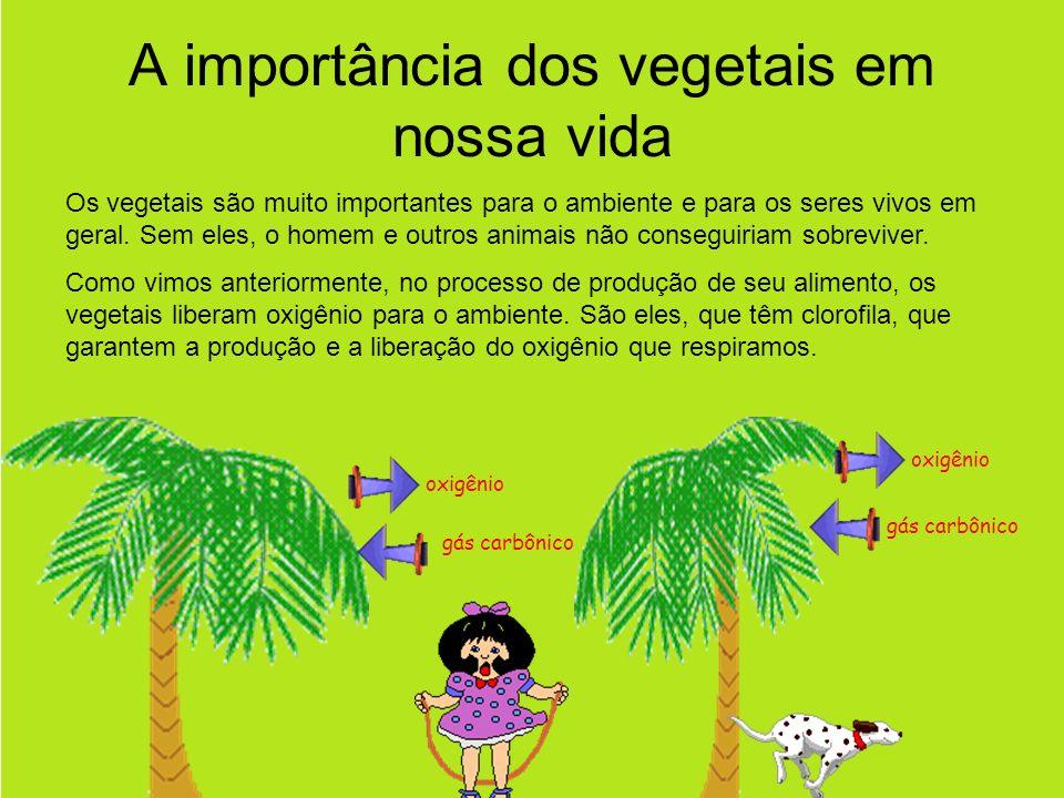 A importância dos vegetais em nossa vida