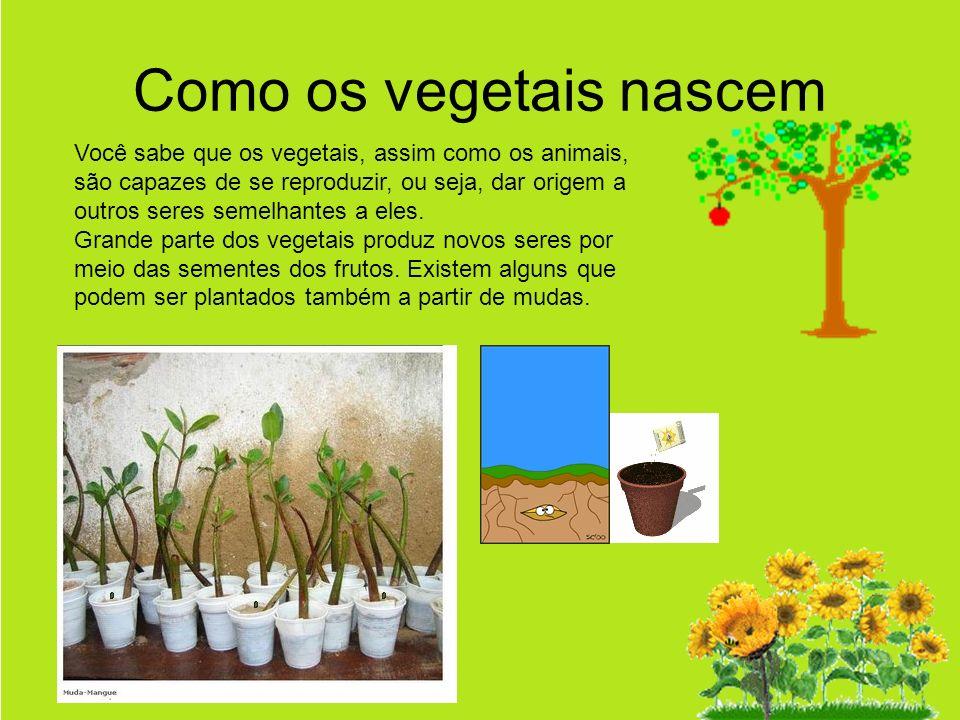 Como os vegetais nascem