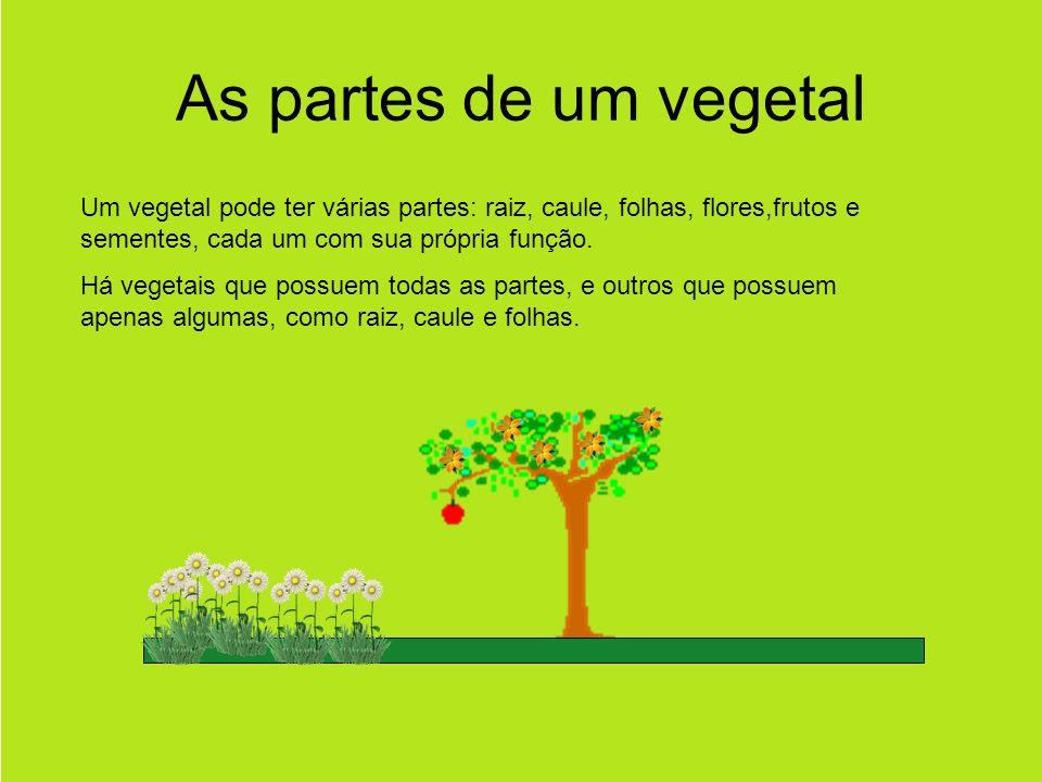 As partes de um vegetal Um vegetal pode ter várias partes: raiz, caule, folhas, flores,frutos e sementes, cada um com sua própria função.