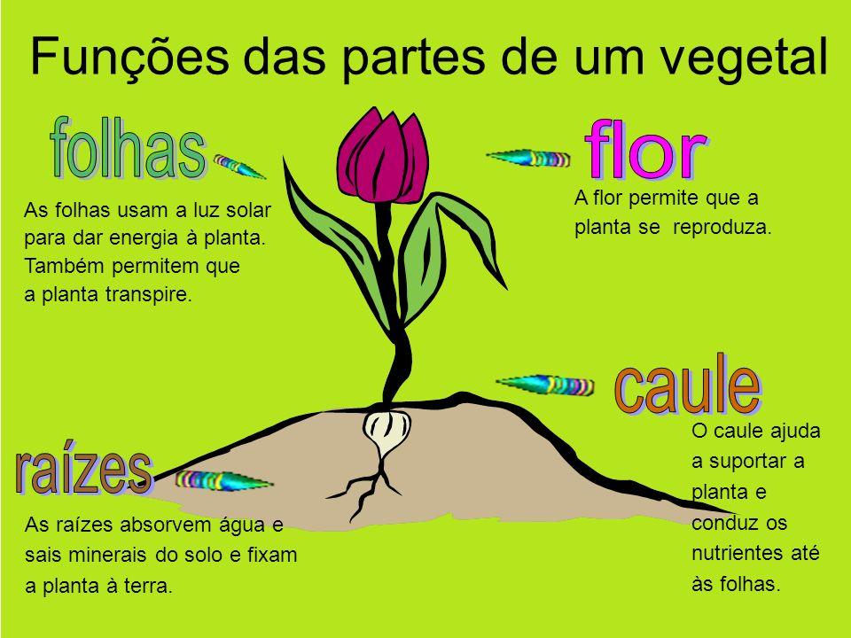 Funções das partes de um vegetal