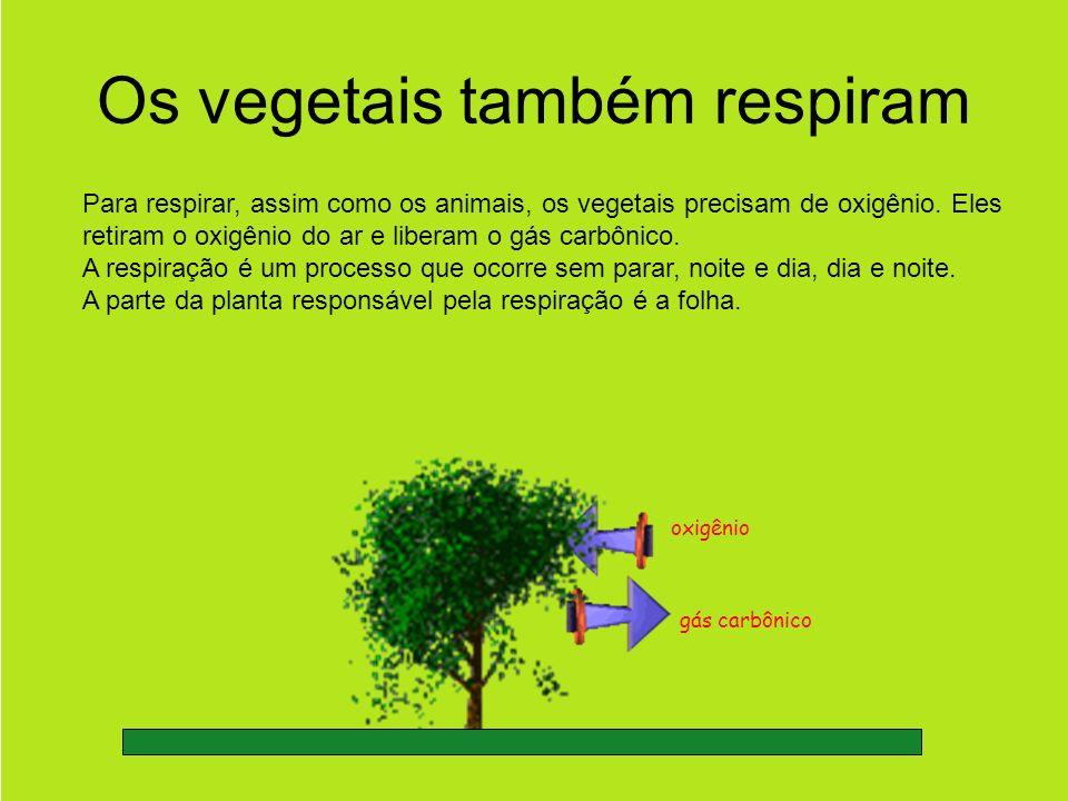 Os vegetais também respiram
