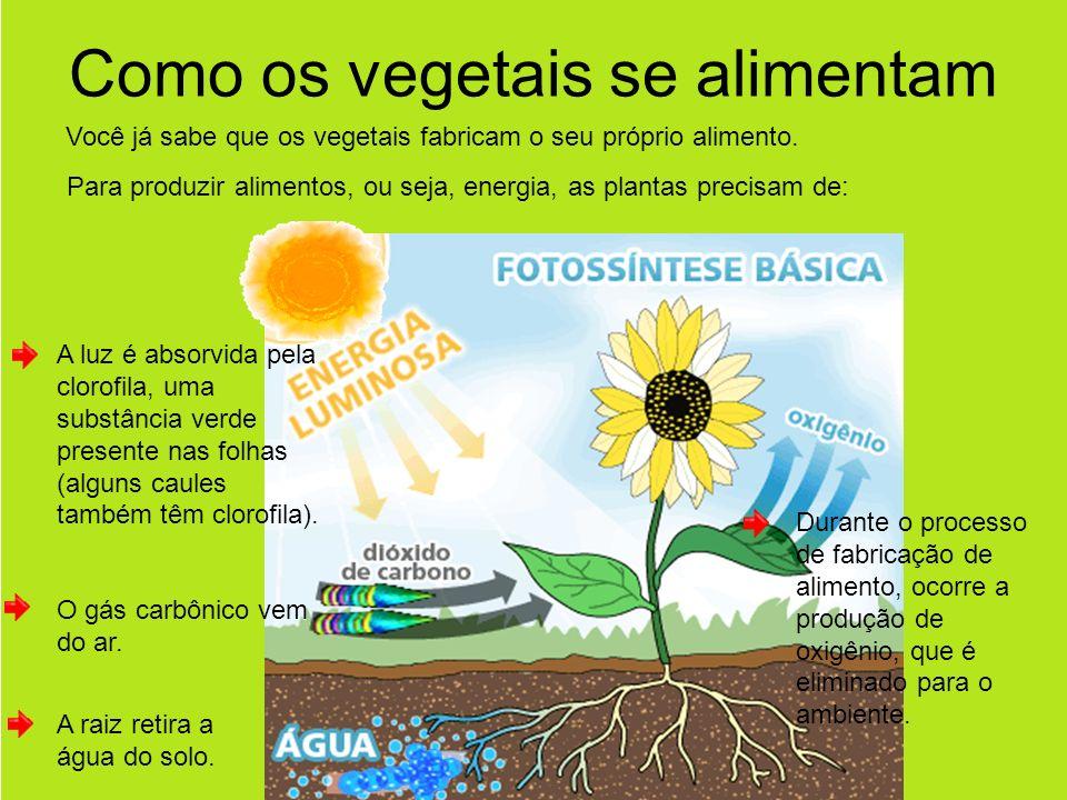 Como os vegetais se alimentam