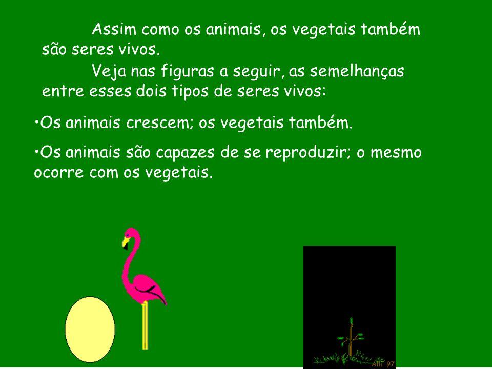 Assim como os animais, os vegetais também são seres vivos.