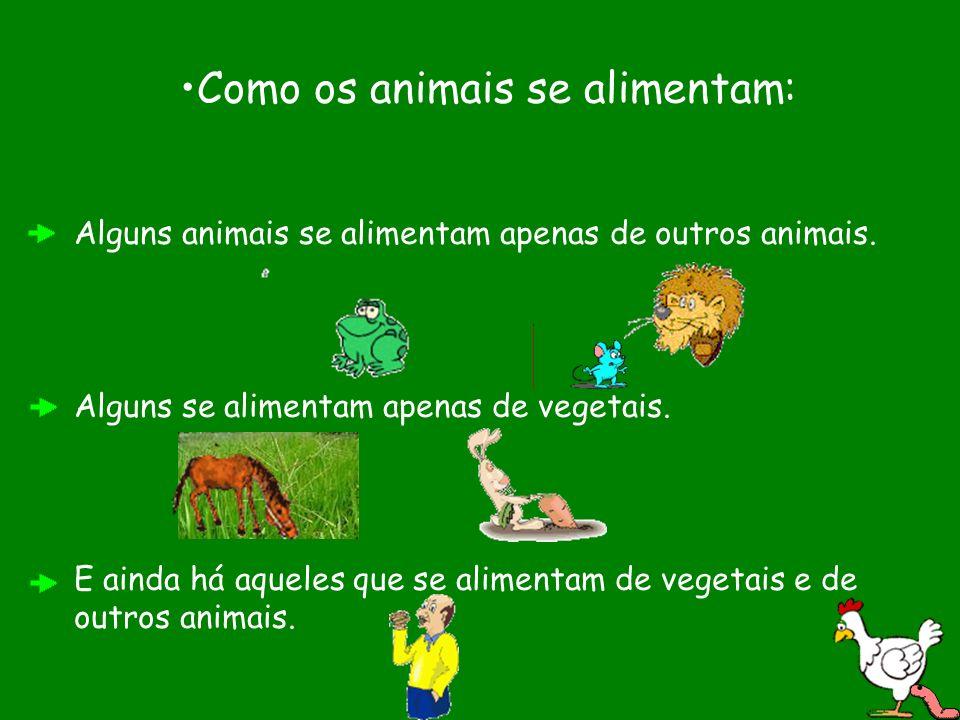 Como os animais se alimentam: