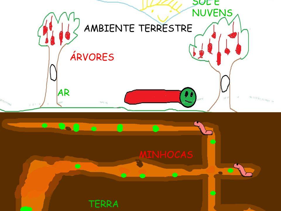 SOL E NUVENS AMBIENTE TERRESTRE AMBIENTE TERRESTRE ÁRVORES AR MINHOCAS TERRA