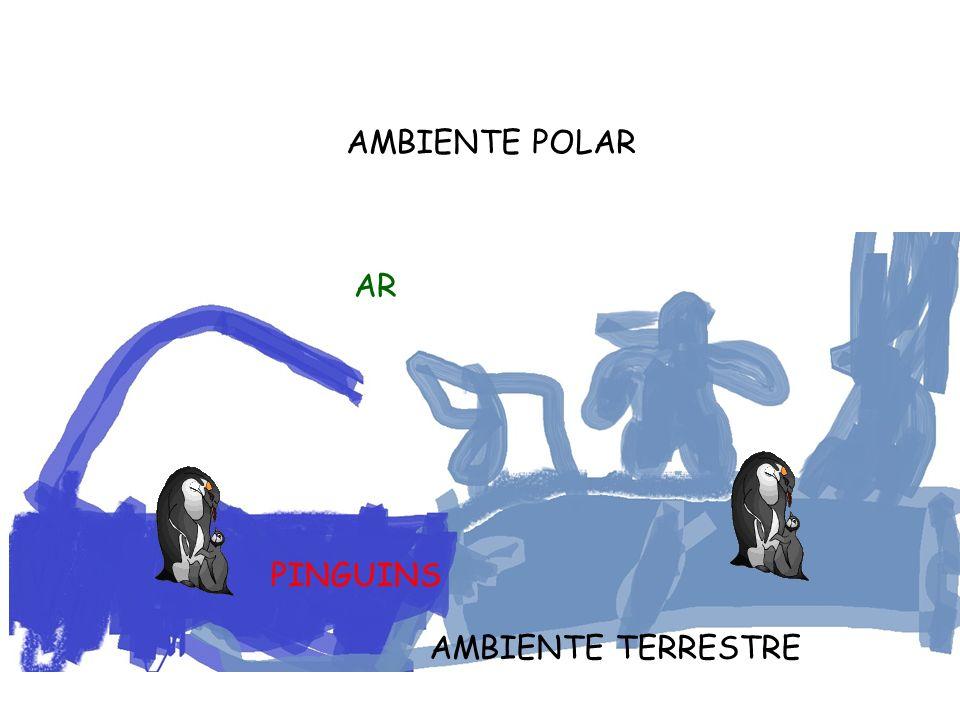 AMBIENTE POLAR AR PINGUINS AMBIENTE TERRESTRE