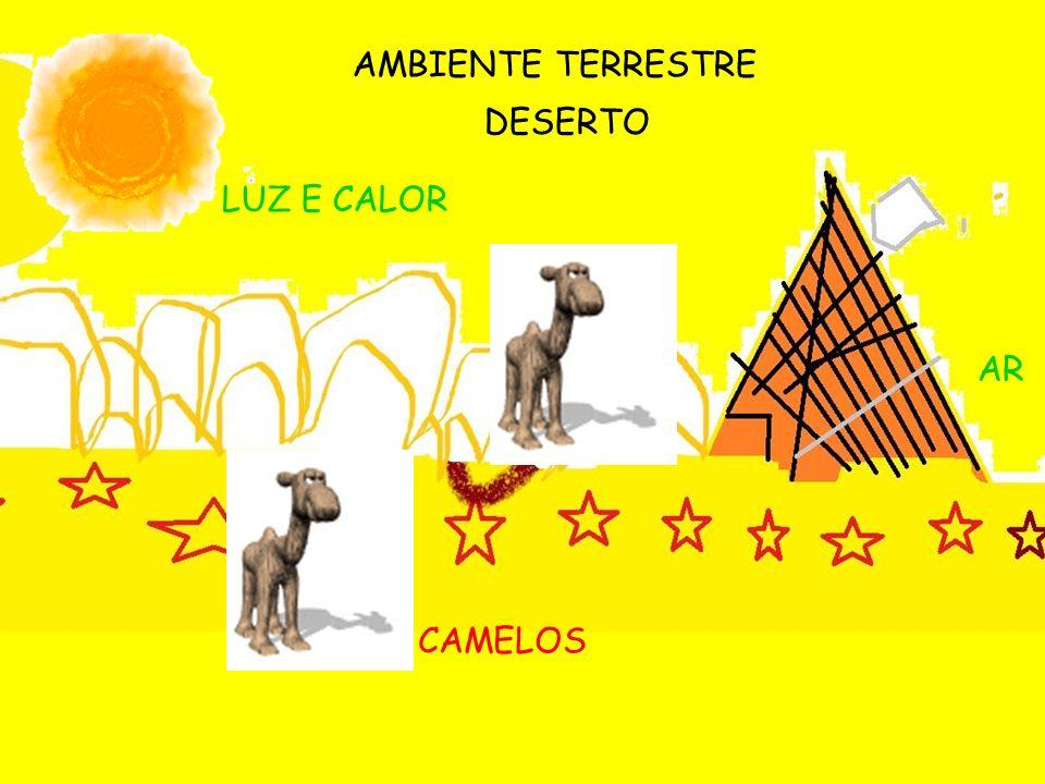 AMBIENTE TERRESTRE DESERTO LUZ E CALOR AR CAMELOS