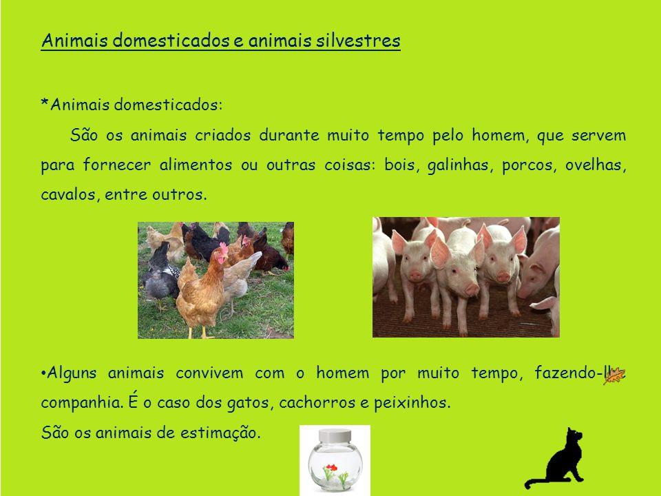 Animais domesticados e animais silvestres
